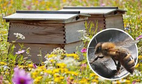 Beekeepers urged to microchip bees after rise in hives being stolen ... | Bees and beekeeping | Scoop.it