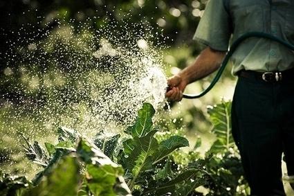 Testez vos connaissances en jardinage sans pesticides   Ca se passe au jardin   pour mon jardin   Scoop.it