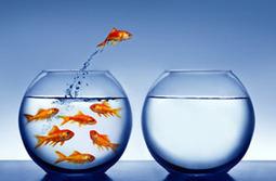 Impliquer l'équipe | Coaching de l'Intelligence et de la conscience collective | Scoop.it