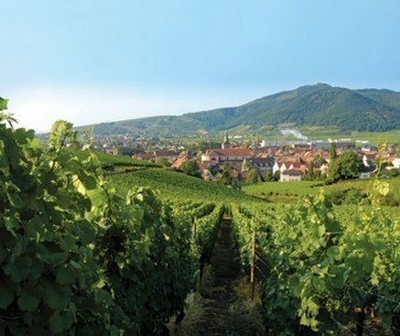 Alsace: the new generation | decanter.com | Southern California Wine and Craft Spirits Journal | Scoop.it