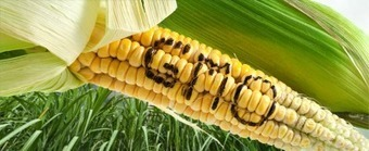 The Unique Risks of GM Crops: Pro-GMO Lobby Engages in Fraud, Smear Campaigns and the Debasement of Science | Global politics | Scoop.it