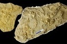 Full Belly Fossil! 'Sea Monster' Had 3 Others in Its Gut - LiveScience.com | Geology | Scoop.it