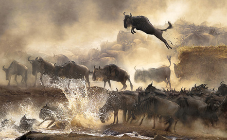 The finalists for 2014's Sony World Photography Awards are outstanding | Machinimania | Scoop.it