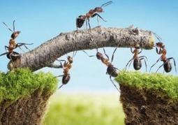 La collaboration ne s'impose pas, elle se créée… | Management et projets collaboratifs | Scoop.it