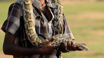 Un chien sauvé des anneaux d'un python par sa maîtresse | CaniCatNews-actualité | Scoop.it
