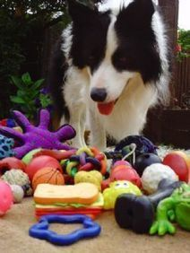 Fetch! First clear evidence that dogs do not naturally distinguish ... | Cog Sci | Scoop.it