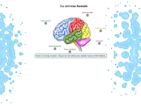 Le cerveau humain: un détournement de cmapTools | Medic'All Maps | Scoop.it