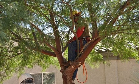 Tree Removal las Vegas | Tree Care Services | Scoop.it