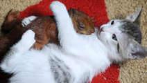 Waarom katten, muizen en honden graag worden geaaid - Home - Volkskrant.nl | Ter leering ende vermaeck | Scoop.it