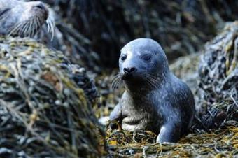 Government ordered to reveal secret seal shooters | Herald Scotland | Blue Planet | Scoop.it