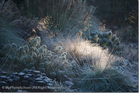 Top Ten Garden Photography Tips | Photography tips and tools | Scoop.it