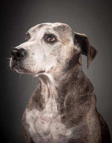 'Old Faithful': Heartwarming Portraits of Elderly Dogs Capture Their Charming Personalities | Digital-News on Scoop.it today | Scoop.it