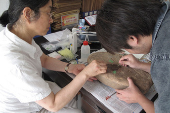 CHINE : Stanford-led research pushes back origins of agriculture in China by 12,000 years | World Neolithic | Scoop.it