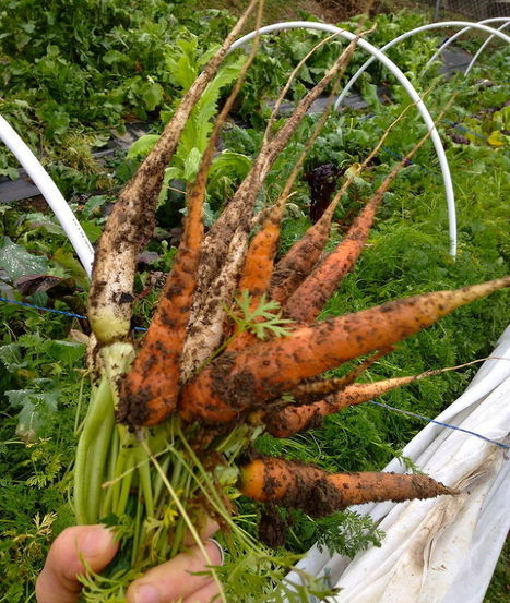 Vegetables That Are Sweeter Grown in Winter   Garden Ideas by Team Pendley   Scoop.it