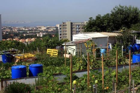Les chercheurs s'intéressent à l'agriculture urbaine | Les colocs du jardin | Scoop.it