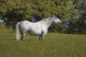 Spring Grass Safety - TheHorse.com | Pets In Pain: Need Stem Cell Nutrition! | Scoop.it