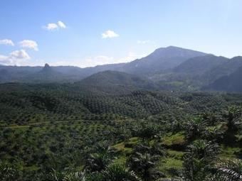 Forests, species on four continents threatened by palm oil expansion | Sustain Our Earth | Scoop.it
