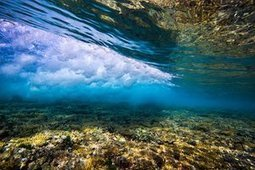 Great Barrier Reef: David #Attenborough ignores politics and appeals to the heart   Messenger for mother Earth   Scoop.it