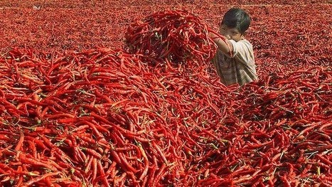 India cleans up spice processing after salmonella revelations | Sustain Our Earth | Scoop.it