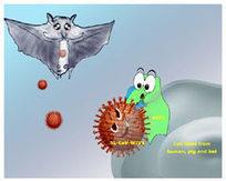 Bats as animal reservoirs for the SARS coronavirus | Virology News | Scoop.it