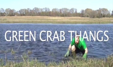 VIDEO: Green Crab Thangs | Ink Chromatography | Technology development for Innovating New Bioactive substances from Natural sources. | Scoop.it