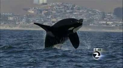 "Coastal towns enjoying busy #Whale watching season ~ #SanFrancisco ""Perhaps trying to tell us What we're #beginin2Learn"" 
