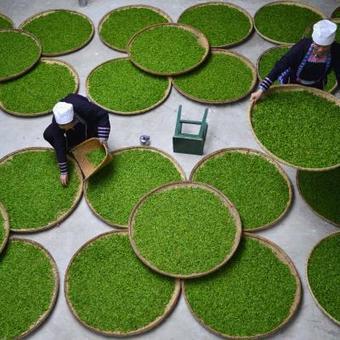 Le thé et le vin, des cousins pas si lointains - Le Soir | thé | Scoop.it