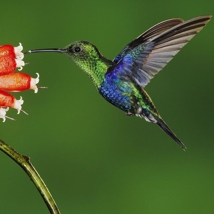 Google Hummingbird | Marketing Strategy | Social Media Today | ThoughtShift Team Scoops | Scoop.it