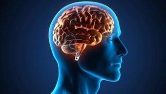 La maladie d'Alzheimer serait accélérée par l'accumulation anormale de gras dans le cerveau | Toxique, soyons vigilant ! | Scoop.it