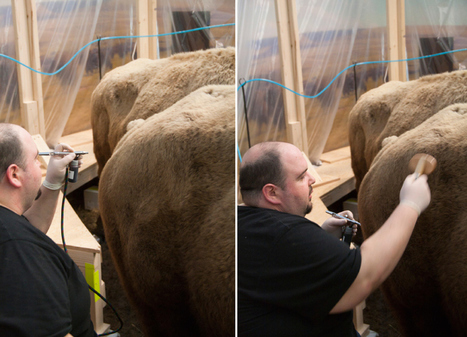 Renovation of the Bernard Family Hall of North American Mammals ... | Taxidermy anthropology | Scoop.it