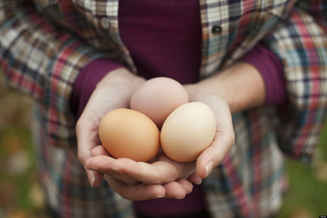 7 Things You Didn't Know About Eggs | A Healthy Body, A Healthy Mind | Scoop.it