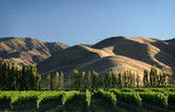 New Zealand Wine Exports Being Driven by Demand From U.S., Asia | Vitabella Wine Daily Gossip | Scoop.it