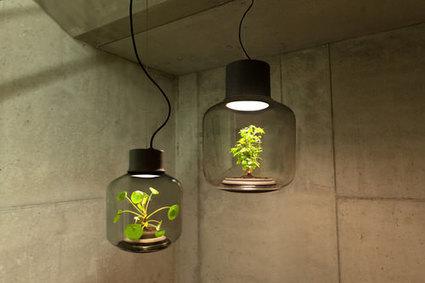 Les lampes «Mygdal Plantlamp», de véritables petits écosystèmes autosuffisants | Arkitektura xehetasunak | Scoop.it