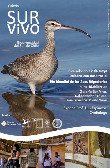 Chile / Puerto Varas: Celebración del Día Mundial de las Aves Migratorias   Agua   Scoop.it