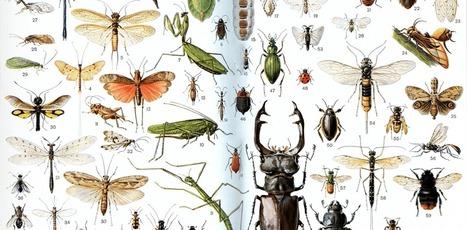 Les insectes vont-ils sauver lemonde? | EntomoNews | Scoop.it