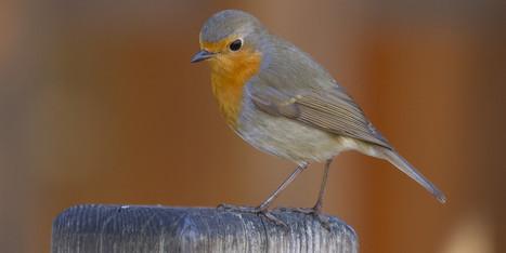 Bientôt un Shazam des chants d'oiseaux? | Ca m'interpelle... | Scoop.it