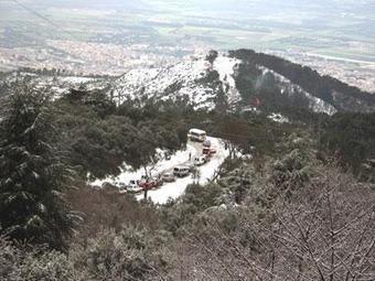 Algérie : Des modifications de la flore et de la faune ont été observées dans le parc de Chréa | EntomoNews | Scoop.it