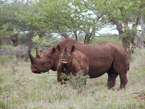 Dallas black rhino hunter sues Delta after airline refused to transport trophy   Trophy Hunting: It's Impact on Wildlife and People   Scoop.it