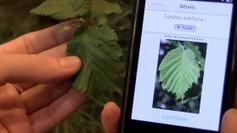 Nouvel outil contributif et participatif pour les botanistes : Pl@ntNet, une application mobile présentée au salon de l'agriculture - France 3 Paris Ile-de-France | Projet mobile garden | Scoop.it