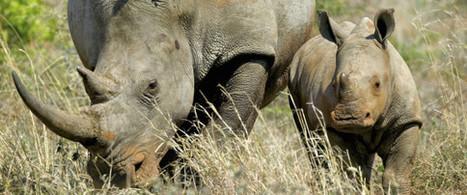 60% des gros herbivores menacés d'extinction | Biodiversité | Scoop.it