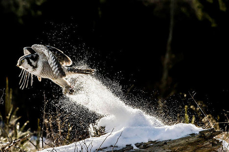 19 Gorgeous Photographs Of Wild Animals During Winter Time | Creation and Innovation | Scoop.it