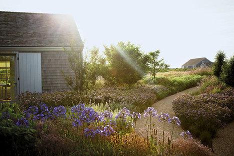 A Wilder Way | Contemporary Garden Design | Scoop.it