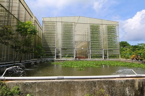 Vertical Farming Offers Solutions to Food Scarcity in Singapore | Unlimited pure water from the air | Scoop.it