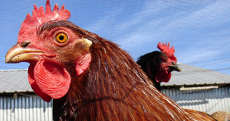 Take Action for Animals | Animal Care Sanctuary | Animal Cruelty | Scoop.it