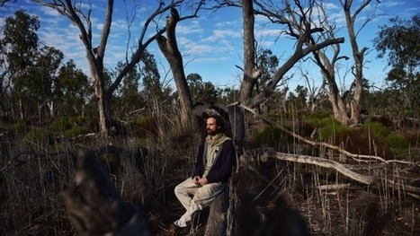 Climate change takes its toll on the Macquarie Marshes in north-western NSW | DSODE HSC Geography | Scoop.it
