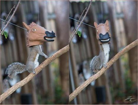 Possibly the best squirrel feeder ever!   Walking On Sunshine   Scoop.it