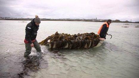 [Voir ou Revoir] Algues, les délices de la mer - France 5 | Biodiversité | Scoop.it