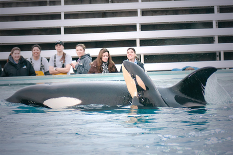 SeaWorld's Worst Nightmare: Calif. Lawmaker to Propose Ban on Orcas in Captivity | Aquaculture | Scoop.it