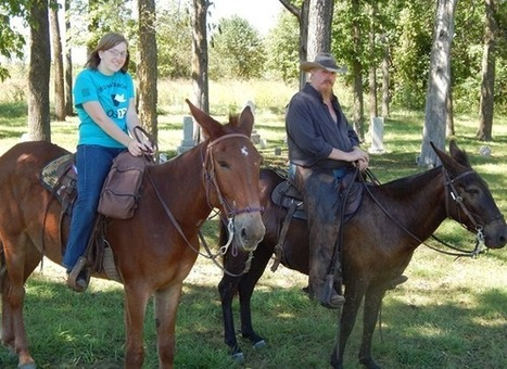 Brooks Gaited Horse Training : About | Today's Horse Sense | Scoop.it