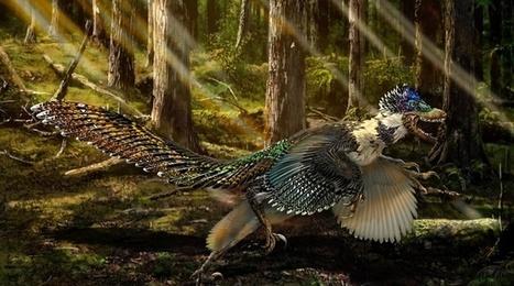 Un cousin du Velociraptor découvert en Chine | Aux origines | Scoop.it